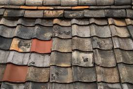 Causes of Mould on Roof
